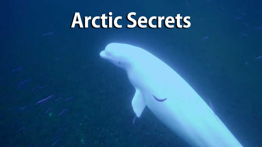 Arctic Secrets – Rhythm of the Bay – Hudson Bay